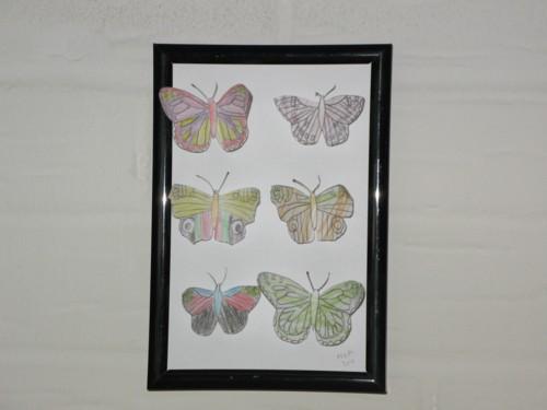 sommerfuglesamling